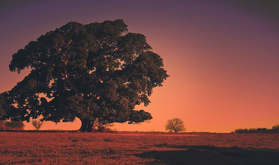 Tree, Landscape, Brazil, Jaú, Nature, Sky, Horizon