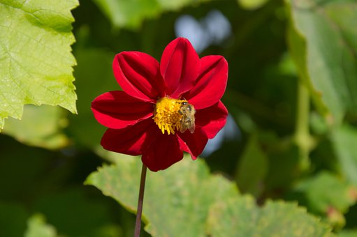 Summer, Red, Flower Bee, Single