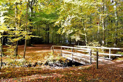 Forest, Leaves, Autumn, Bridge, Moss, Autumn Forest