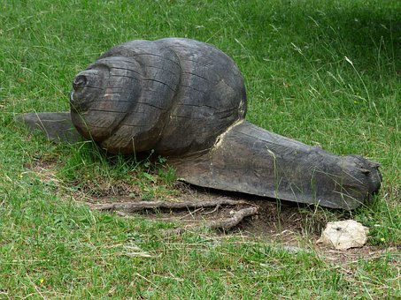 Snail, Wood, Carving, Nature Trail, Holzfigur, Fig