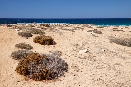 Beach, Coast, Desert, Dry, Grass, Landscape, Nature