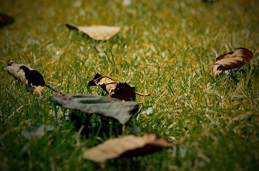 Leaves, Grass, Garden, Leaf, Durres Batt, Dry