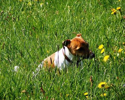 Dog, Meadow, Green, Animal, Small Dog, Hundeportrait