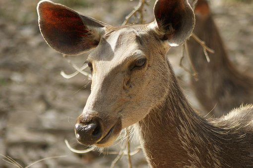 Wildlife, India, Ranthambore National Park