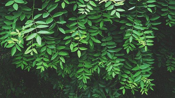 Leaves, Fresh, Jungle, Tropical, Green, Leaf, Nature