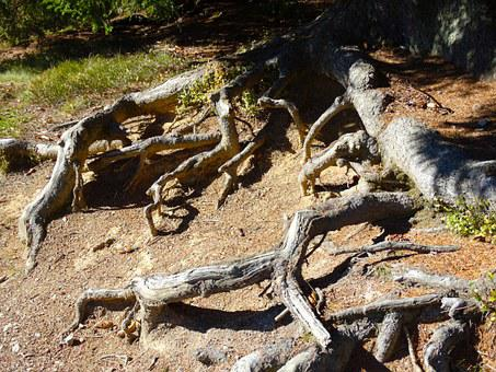 Tree Roots, Root System, Nature