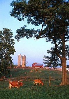 Wisconsin, Landscape, Farm, Rural, Rustic, Cattle, Sky