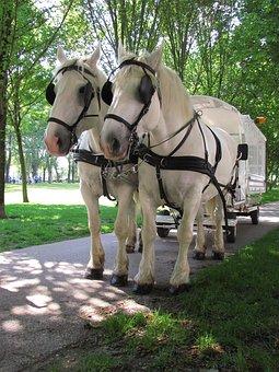 Animal, Animals, Horse, Horses, Boulogne, White, Rare