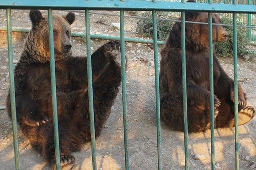 Bear, Bears, Zoo, Safari Park, Gelendzhik, Animals