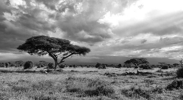 Africa, Kenya, Landscape, Nature, East Africa, Safari