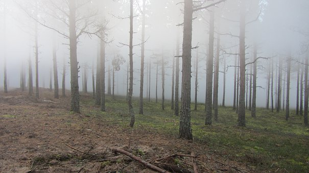 Forest, Wood, Twigs, Nature, Summer, Finnish, Fog