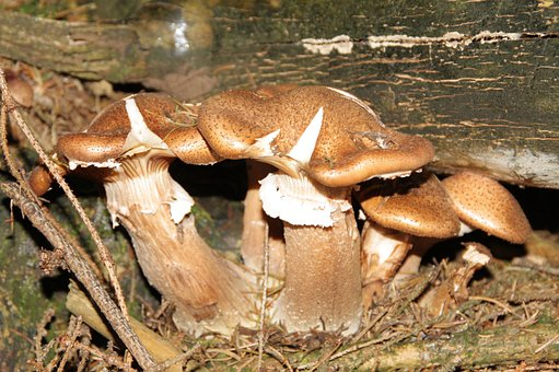 Mushroom, Nature, Forest, Leaves, Autumn, Mood