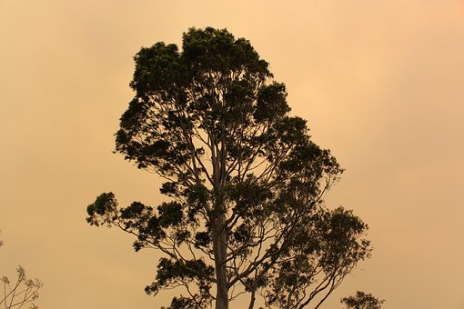 Tree, Bushfire, Smoke, Cloudy, Environment, Sun