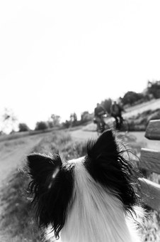 Dog, Ears, Direction Of View, Point Of View, Puppy