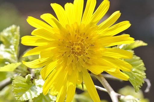 Meadows Dubius, Flower, Plant, Pointed Flower