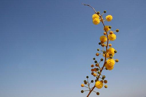Flower, Yellow, Bubble, Ball, Kuller, About, Ornament