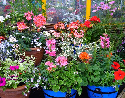 Flowering Pot Plants, Plant Display, Pot, Plants