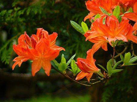 Blossom, Bloom, Garden, Flowers, Plant, Flower, Spring