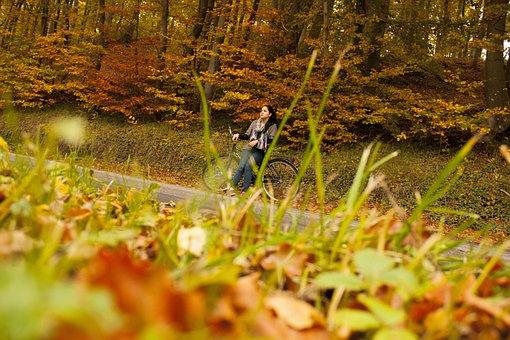 Autumn, Forest, Biking, Fall, Nature, Orange, Natural