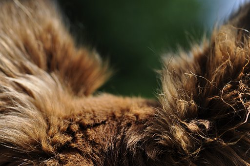 Ears, Point Of View, Direction Of View, Dog, Close, Fur