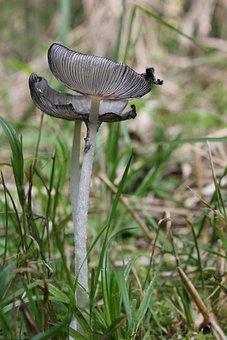 Mushrooms, Grass, Nature, Grey, Close Up, Mushroom Base
