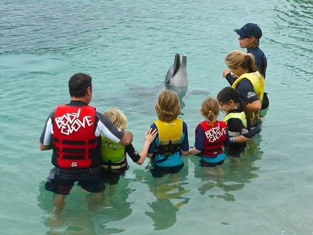 Dolphin, Performance, Wildlife, Aquatic, Play, Marine
