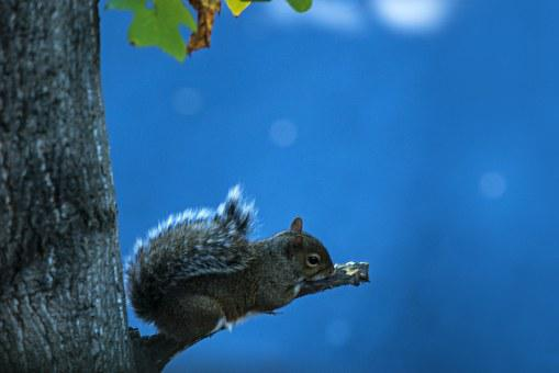 Squirrel, Animal, Rodent, Sky, Resting, Wild, Wildlife