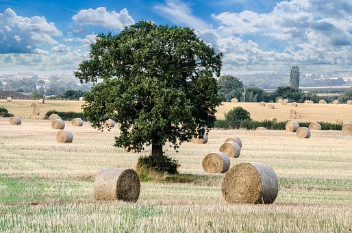 Agricultural, Agriculture, Cereal, Circle, Corn, Crop