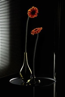 Flower, Vase, Black, Decoration, Color, Natural