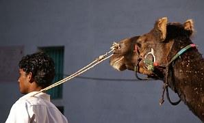 Heads, India, Human, Animal, Friends, Community