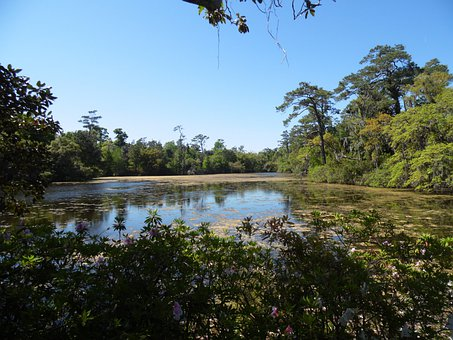 Arlie Garden, Pond, Water, Park, Outside, Lake