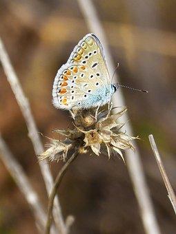 Butterfly, Colors, Wings, Beauty, Lepidopteran
