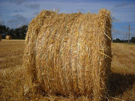 Straw, Field, Boot, Yellow