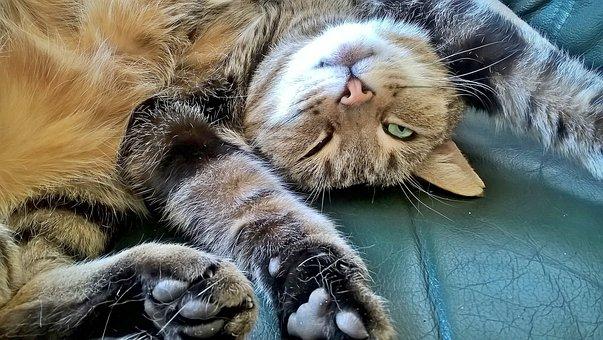 Cat, Relaxation, Concerns, Sleep, Balance, Stress-free