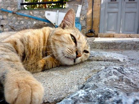 Cat, Greece, Chill Out, Sleep, Relax, Siesta
