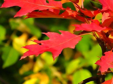Autumn, Foliage, Autumn Gold, Collapse, Watercolor