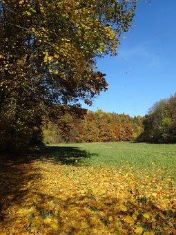 Autumn, Foliage, Collapse, Autumn Gold, Tree, Landscape