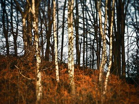 Forest, Trees, Nature, Landscape, Log, Birch, Mood
