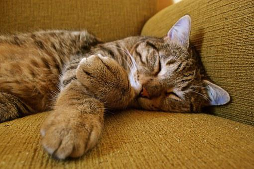 Cat, Animal, Green, Chill Out, Relaxed, Sleep