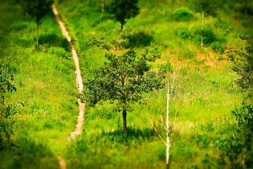 Away, Trees, Landscape, Park, Nature, Mood, Hill