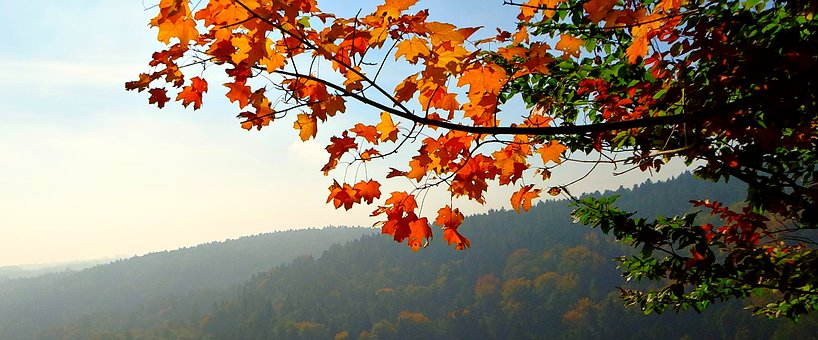 Foliage, Autumn, Landscape, Nature, Collapse
