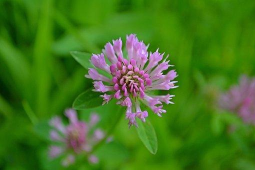 Flowers, Pink, Pink Flowers, Spring, Wild Flowers
