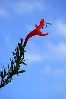 Blossom, Bloom, Red, Bush, Evergreen Bush, Plant