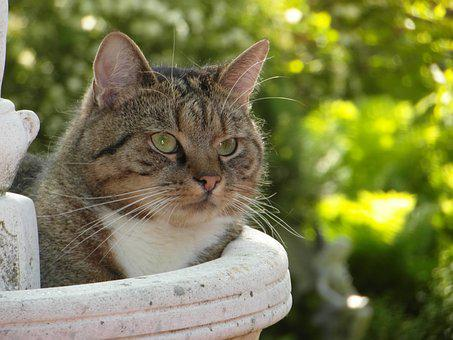 Cat, Relaxation, Pet, Rest, Domestic Cat, Lazy