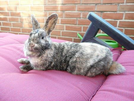 Rabbit, Lazy, Relaxed, Rest, Relaxation, Animal, Relax