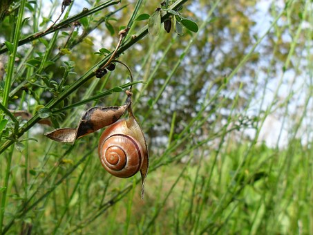 Snail, House, Depend On, Shell, Tree, Forest, Walk