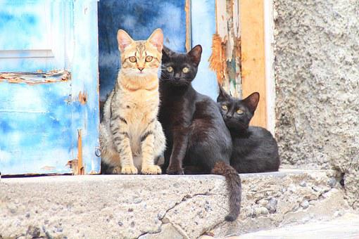 Cat, Animal, Young Cat, Pet, Domestic Cat, Black Cat