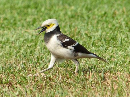 Bird, Garden, Animal, Nature, Outdoor, Spring, Park