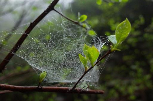A Spider's Web, Green Leaf, The Leaves