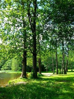 Summer, Beach, Beautiful, Finnish, Water, Lake